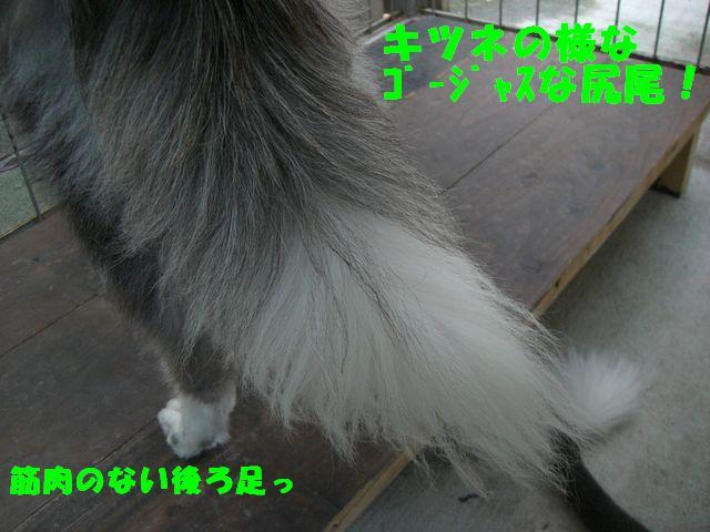 b0137913_1334736.jpg