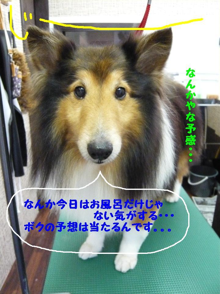 b0130018_14194023.jpg