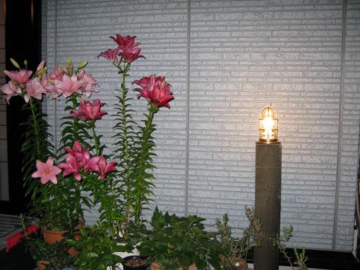 ガーデンライト_f0129726_21484427.jpg