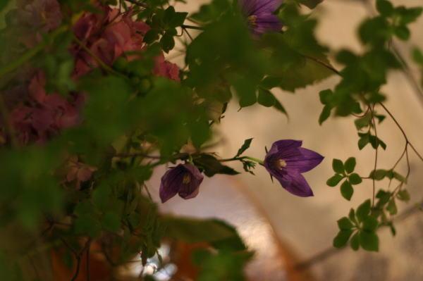 シェ松尾天王洲倶楽部様の装花 りんごとラフランスと桔梗_a0042928_12392381.jpg