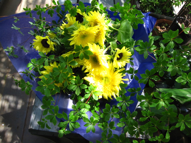 BAR 番長 紫陽花の宴_c0102228_12471753.jpg