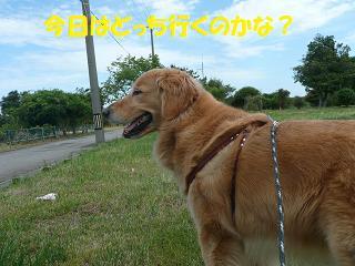 f0114128_2040727.jpg