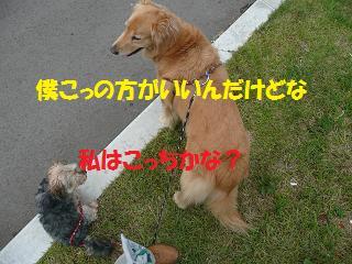 f0114128_20431662.jpg