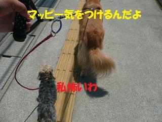 f0114128_20494674.jpg