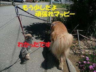 f0114128_2105652.jpg