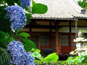 わが街の「あじさい(紫陽花)寺」_b0102572_16413185.jpg