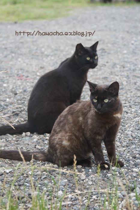 Cats in Shonan #27_c0158775_20274322.jpg