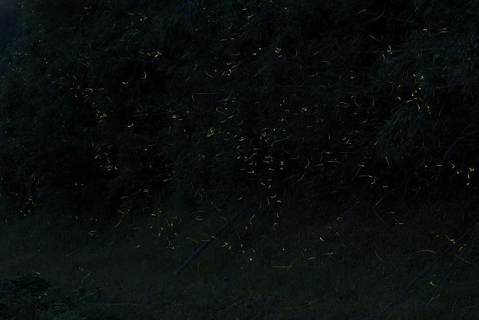 蛍石レンズの向こう側のホタル_e0135098_083922.jpg