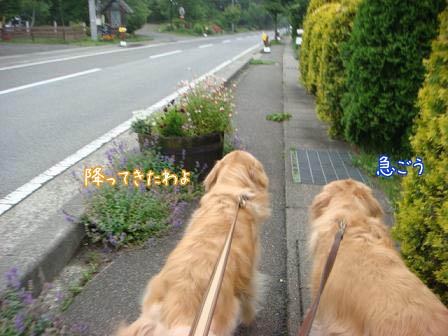 雨続き_f0064906_1741630.jpg