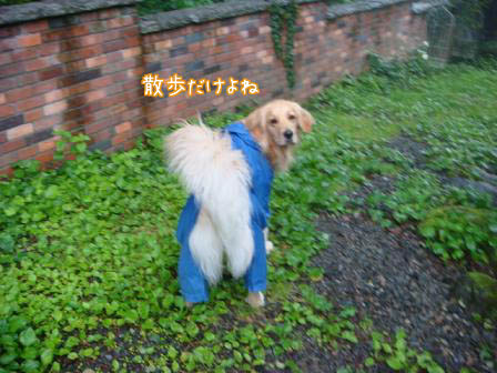 雨続き_f0064906_17485816.jpg