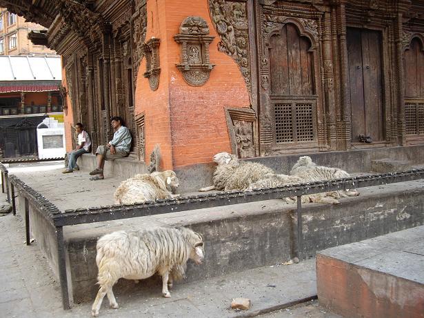 From Nepal 日記 <生活> _f0042307_1655449.jpg