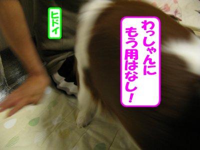 b0185323_1648288.jpg