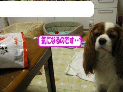 b0185323_16503877.jpg