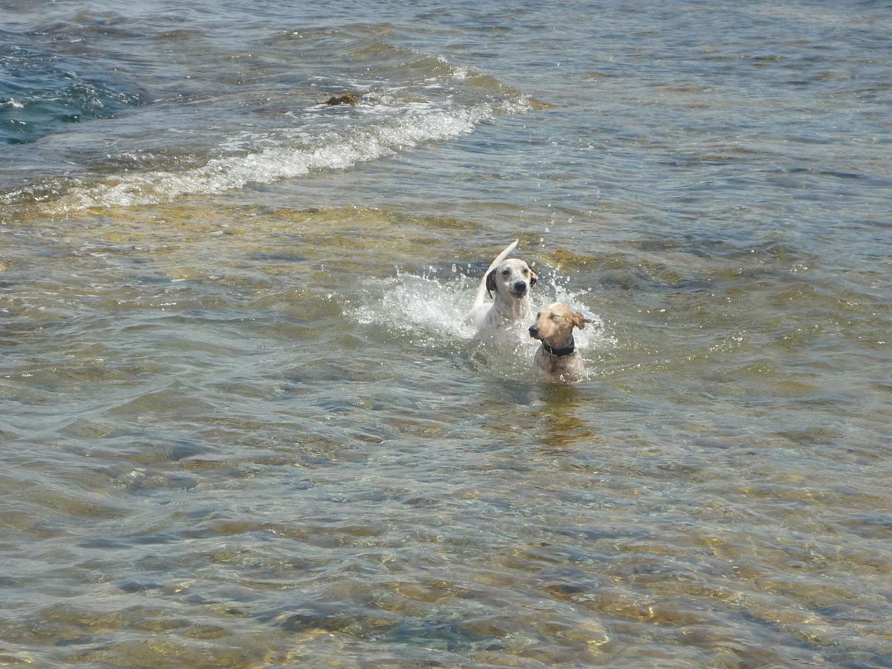 初泳ぎ バゥ_d0084229_781233.jpg
