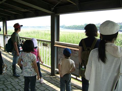 谷津干潟の自然観察会_e0089232_2011287.jpg