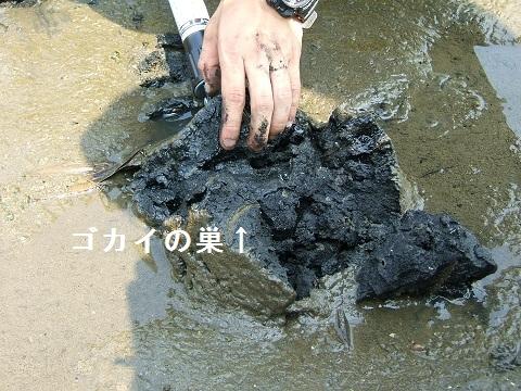 谷津干潟の自然観察会_e0089232_2020312.jpg