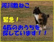 f0166234_1636744.jpg