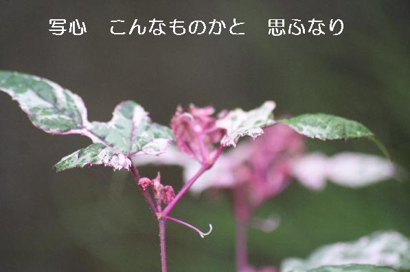 b0173244_2085819.jpg