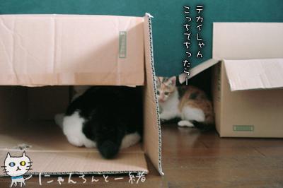 今日の子猫と大猫_e0031853_12334228.jpg