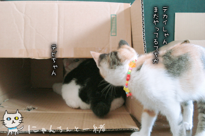 今日の子猫と大猫_e0031853_12344294.jpg