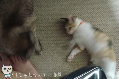 今日の子猫と大猫_e0031853_12355864.jpg