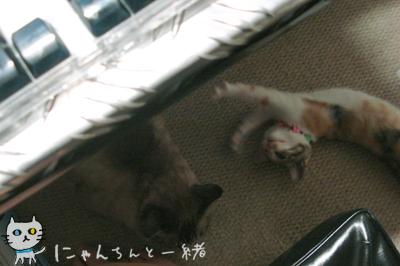 今日の子猫と大猫_e0031853_1236191.jpg