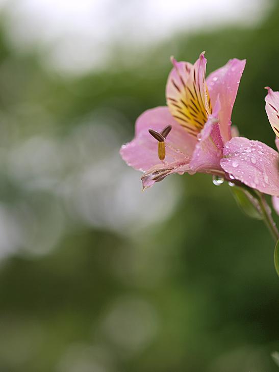 梅雨の雨_a0100959_026276.jpg