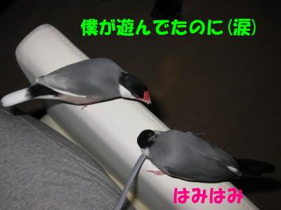 b0158061_2029890.jpg