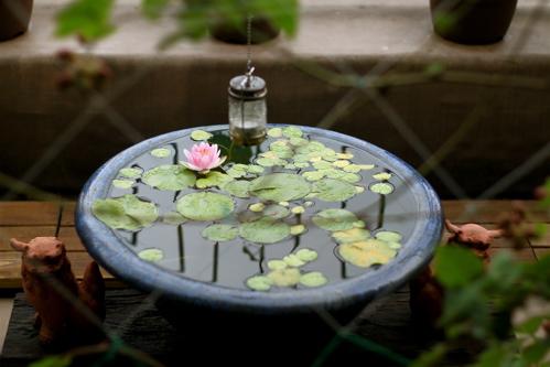 梅雨時の睡蓮_f0160063_7425994.jpg
