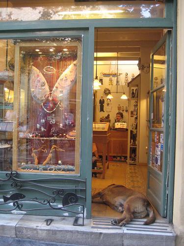 お店の入口で昼寝をしているカネロ_f0037264_21344645.jpg