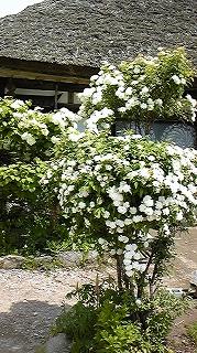福島British Hillsと大内宿_c0189469_23475086.jpg
