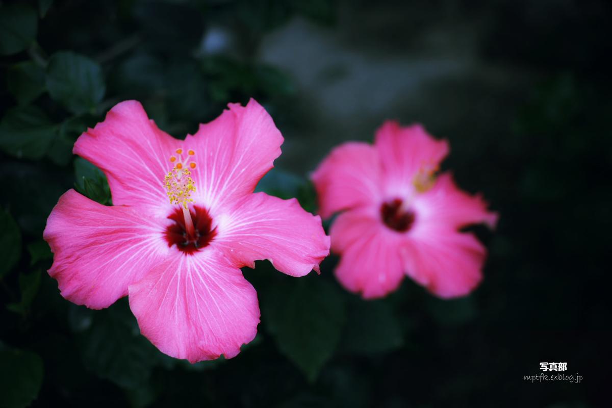 咲くやこの花館にて 1_f0021869_21351486.jpg