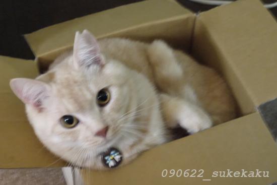 LUMIX G1 で 猫  その2_a0002672_152219100.jpg