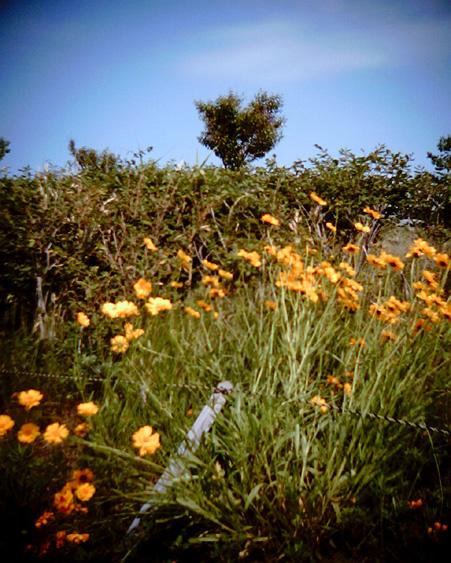 Flowers on the hill_e0174281_19564452.jpg