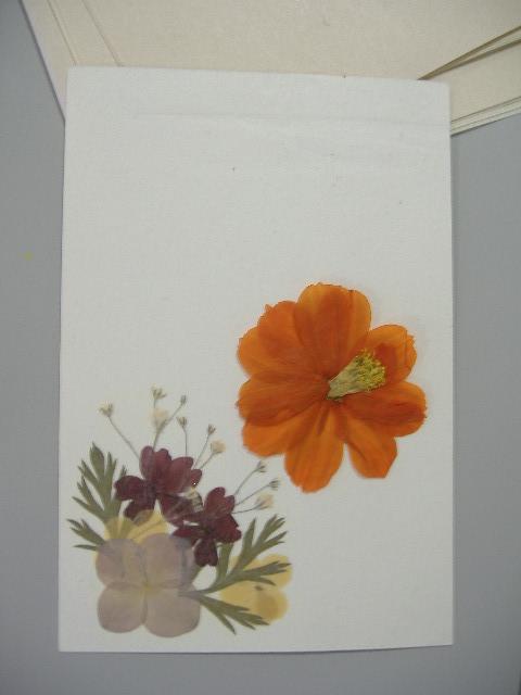 押し花ではがき作り♪_b0159098_9565959.jpg