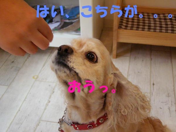 b0067012_1324520.jpg