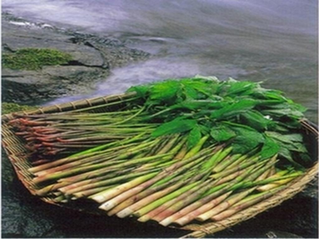 竹の子~ジュンサイ_f0192924_19225157.jpg