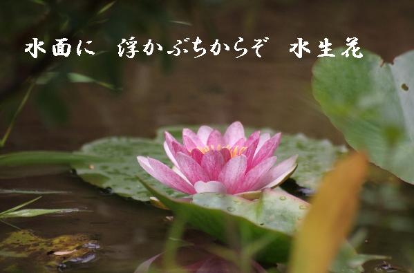 b0173244_18273077.jpg