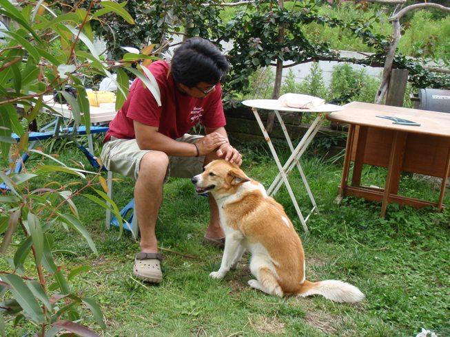 犬たちの下田_d0143957_11104772.jpg