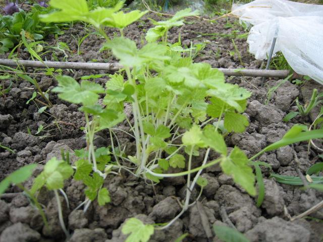 野菜の生育状況最新レポート_e0121558_22482356.jpg