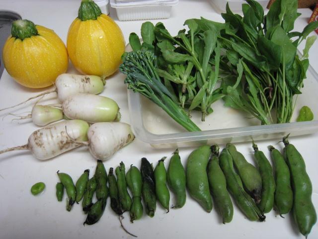 野菜の生育状況最新レポート_e0121558_22502854.jpg