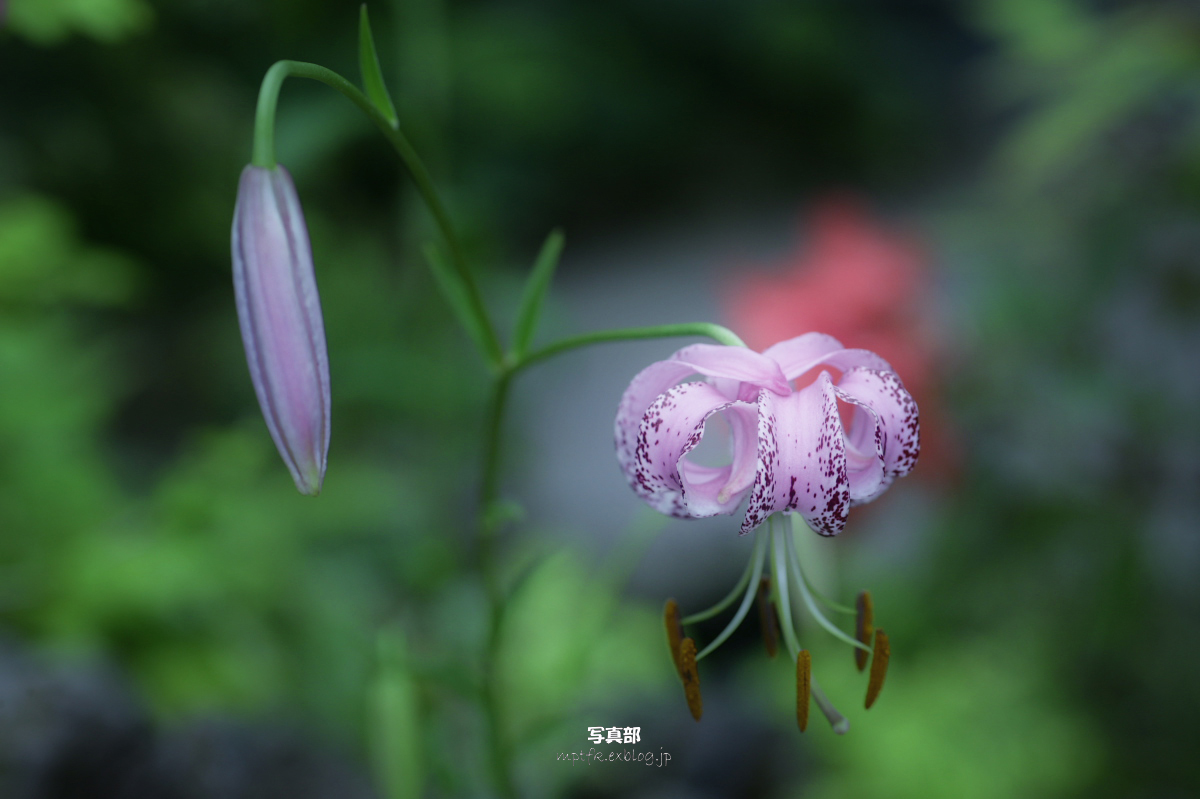 咲くやこの花館にて 2_f0021869_235682.jpg