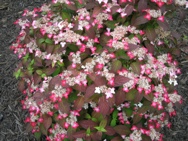 紫陽花も咲いて_f0085369_21293291.jpg