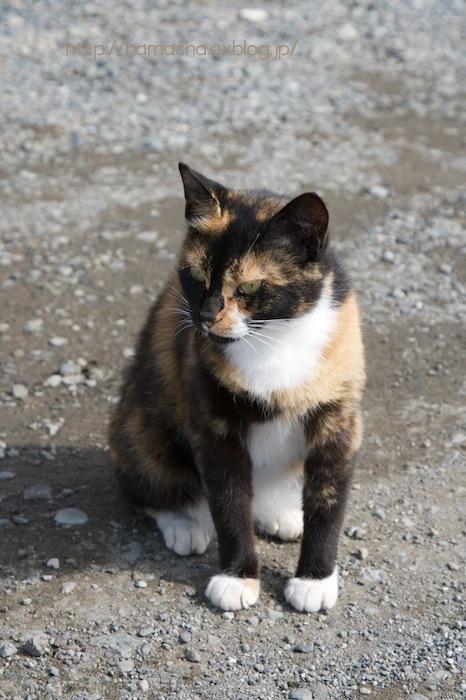 Cats in Shonan #29_c0158775_20225982.jpg