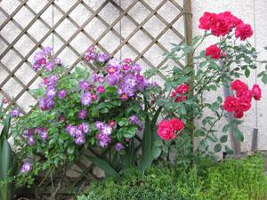薔薇色_b0058290_151257100.jpg