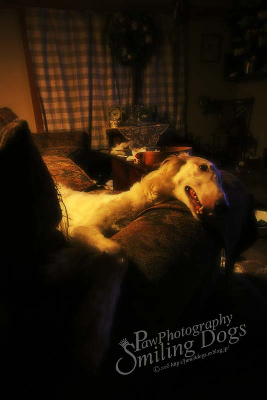 Sleeping Beauty_f0116805_23102086.jpg