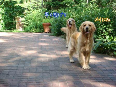 草刈り_f0064906_9415050.jpg