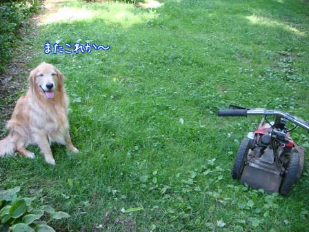 草刈り_f0064906_9441148.jpg