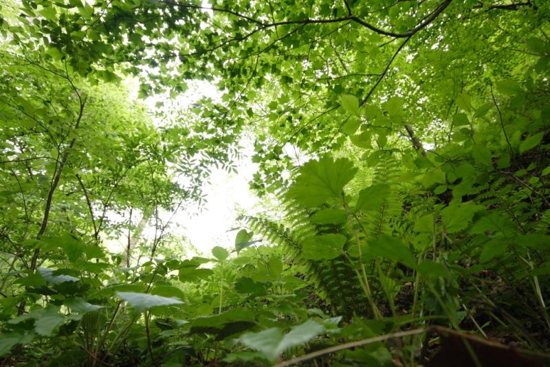 木や草のおしゃべり_f0091207_2323757.jpg