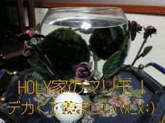 b0183113_0522587.jpg
